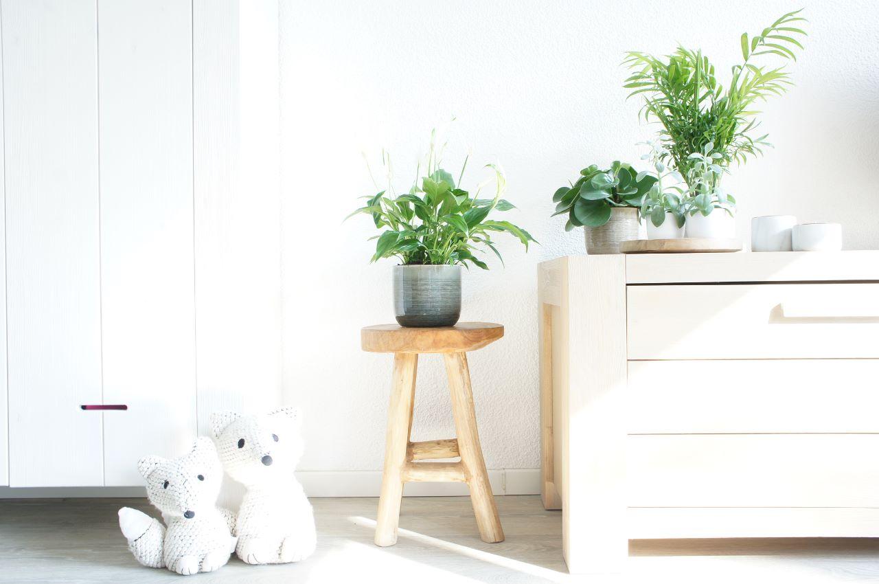 Voordelen van planten in huis